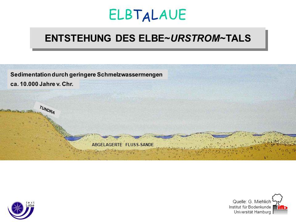 Quelle: G. Miehlich Institut für Bodenkunde Universität Hamburg ENTSTEHUNG DES ELBE~URSTROM~TALS A ELBT LAUE Lotse t e x t Sedimentation durch geringe
