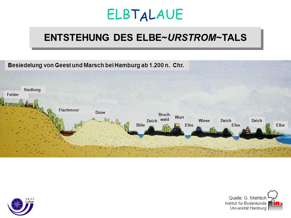 Quelle: G. Miehlich Institut für Bodenkunde Universität Hamburg ENTSTEHUNG DES ELBE~URSTROM~TALS A ELBT LAUE Lotse t e x t Besiedlung von Geest und Ma
