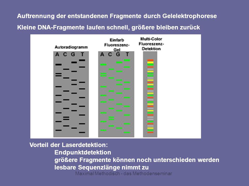 Auftrennung der entstandenen Fragmente durch Gelelektrophorese Kleine DNA-Fragmente laufen schnell, größere bleiben zurück Vorteil der Laserdetektion: