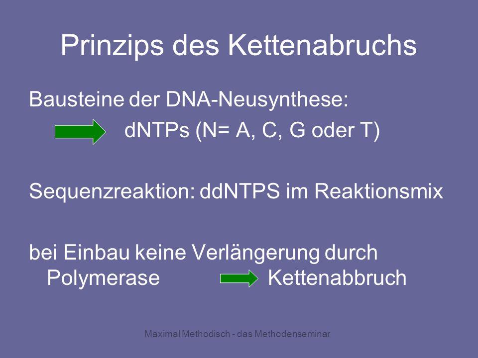 Maximal Methodisch - das Methodenseminar Prinzips des Kettenabruchs Bausteine der DNA-Neusynthese: dNTPs (N= A, C, G oder T) Sequenzreaktion: ddNTPS i