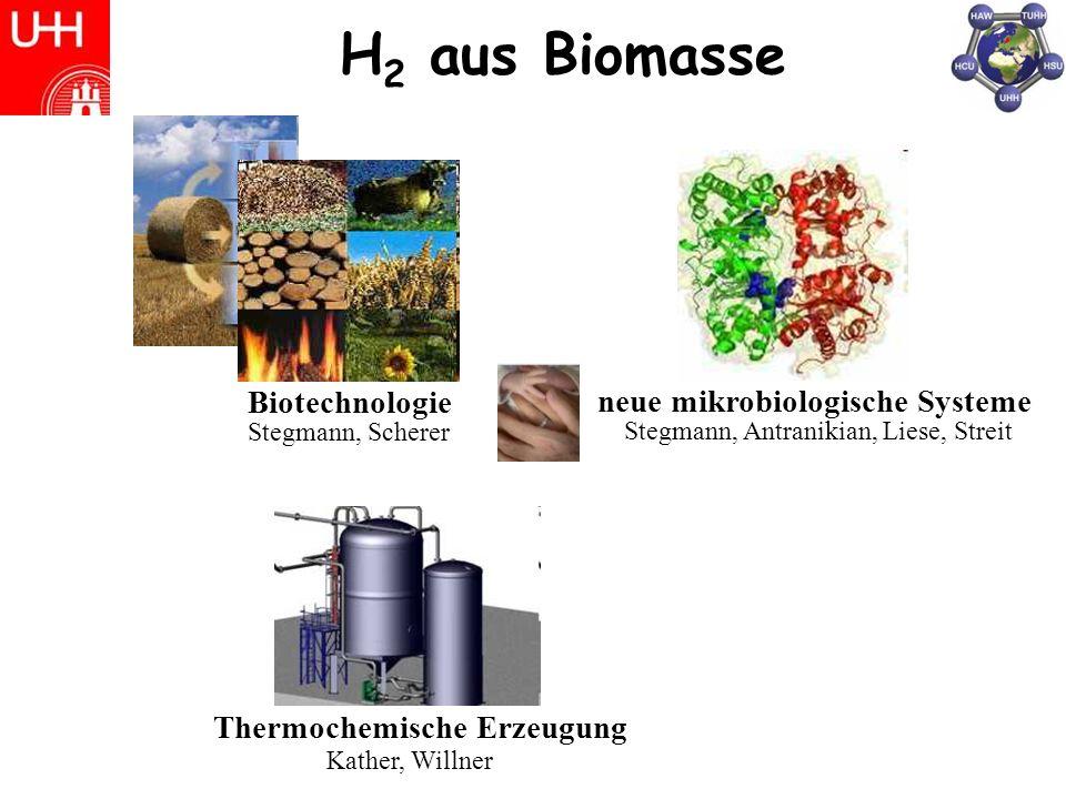 H 2 aus Biomasse Biotechnologie Stegmann, Scherer neue mikrobiologische Systeme Stegmann, Antranikian, Liese, Streit Thermochemische Erzeugung Kather, Willner