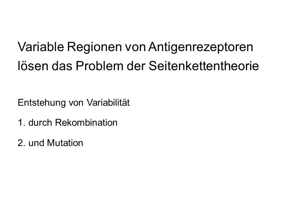 Variable Regionen von Antigenrezeptoren lösen das Problem der Seitenkettentheorie Entstehung von Variabilität 1.durch Rekombination 2.und Mutation