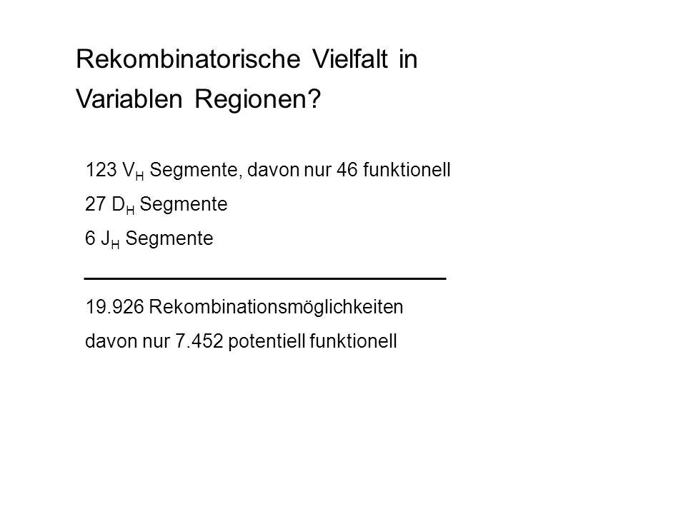 Rekombinatorische Vielfalt in Variablen Regionen? 123 V H Segmente, davon nur 46 funktionell 27 D H Segmente 6 J H Segmente 19.926 Rekombinationsmögli
