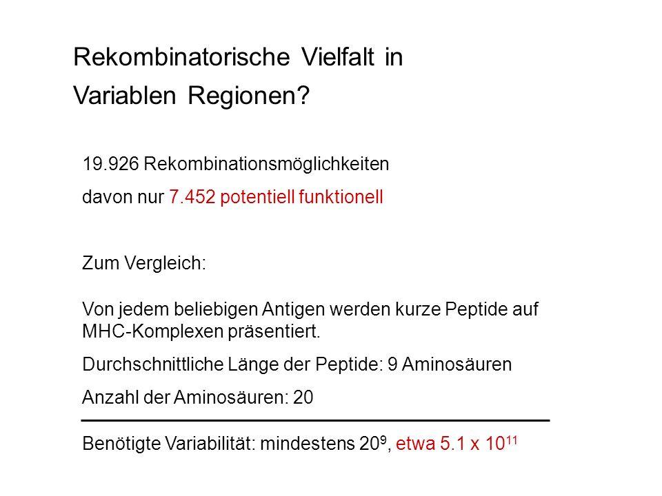 Rekombinatorische Vielfalt in Variablen Regionen? 19.926 Rekombinationsmöglichkeiten davon nur 7.452 potentiell funktionell Zum Vergleich: Von jedem b
