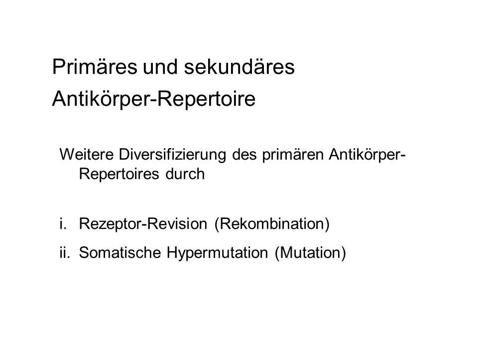 Primäres und sekundäres Antikörper-Repertoire Weitere Diversifizierung des primären Antikörper- Repertoires durch i.Rezeptor-Revision (Rekombination)