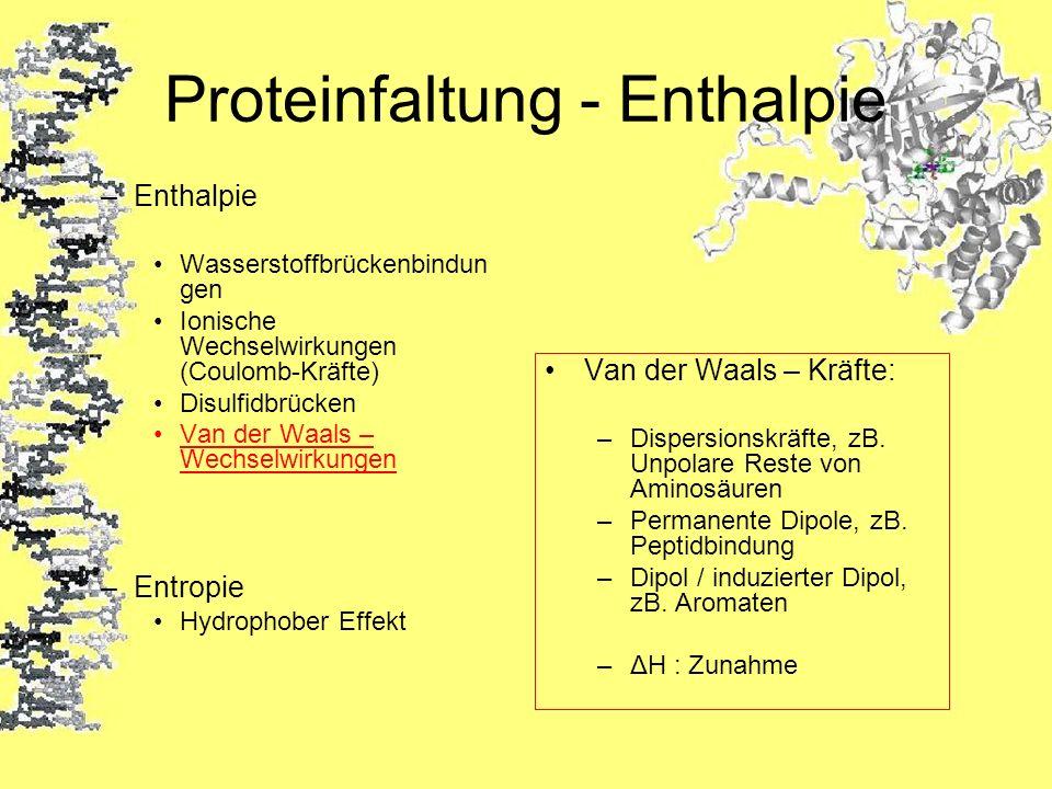 Proteinfaltung - Enthalpie –Enthalpie Wasserstoffbrückenbindun gen Ionische Wechselwirkungen (Coulomb-Kräfte) Disulfidbrücken Van der Waals – Wechselw