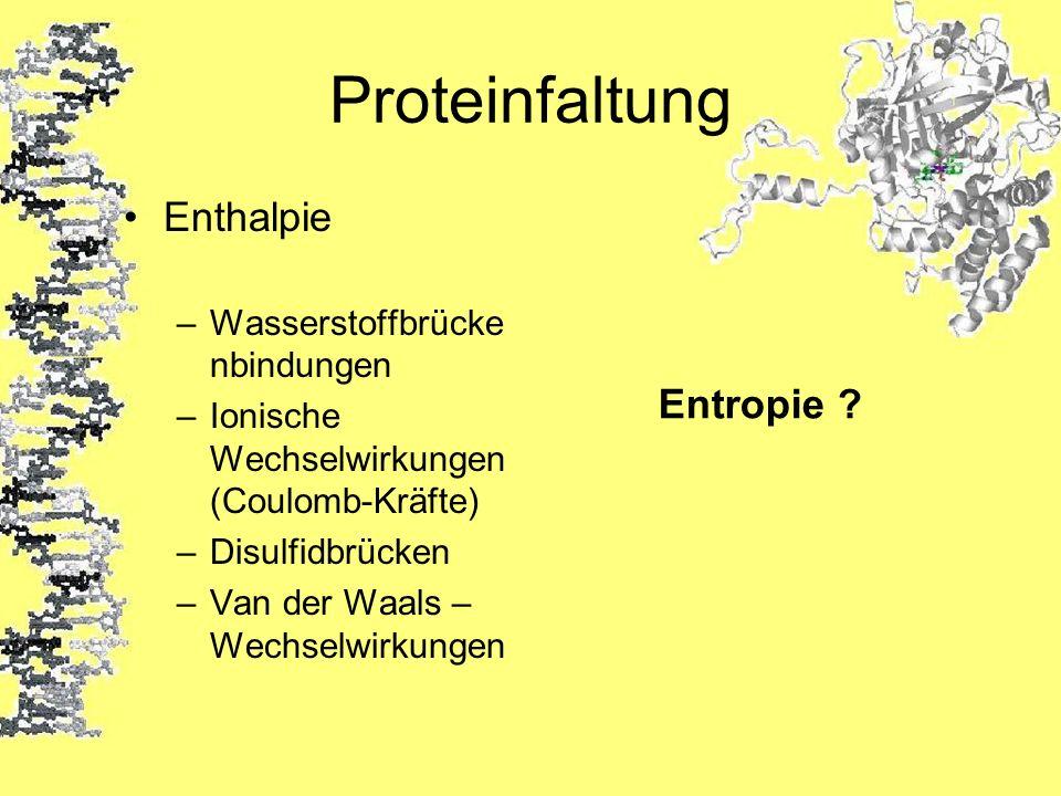 Proteinfaltung Enthalpie –Wasserstoffbrücke nbindungen –Ionische Wechselwirkungen (Coulomb-Kräfte) –Disulfidbrücken –Van der Waals – Wechselwirkungen