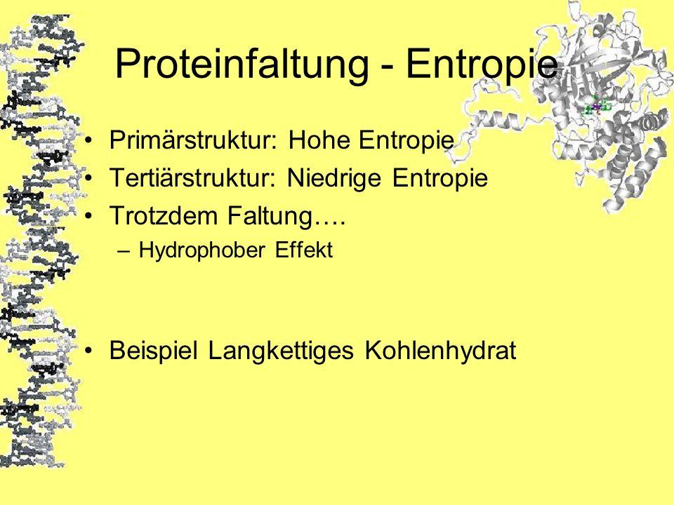 Proteinfaltung - Entropie Primärstruktur: Hohe Entropie Tertiärstruktur: Niedrige Entropie Trotzdem Faltung…. –Hydrophober Effekt Beispiel Langkettige