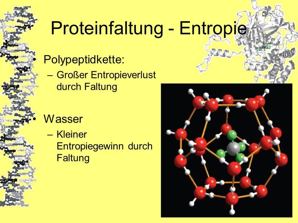 Proteinfaltung - Entropie Polypeptidkette: –Großer Entropieverlust durch Faltung Wasser –Kleiner Entropiegewinn durch Faltung