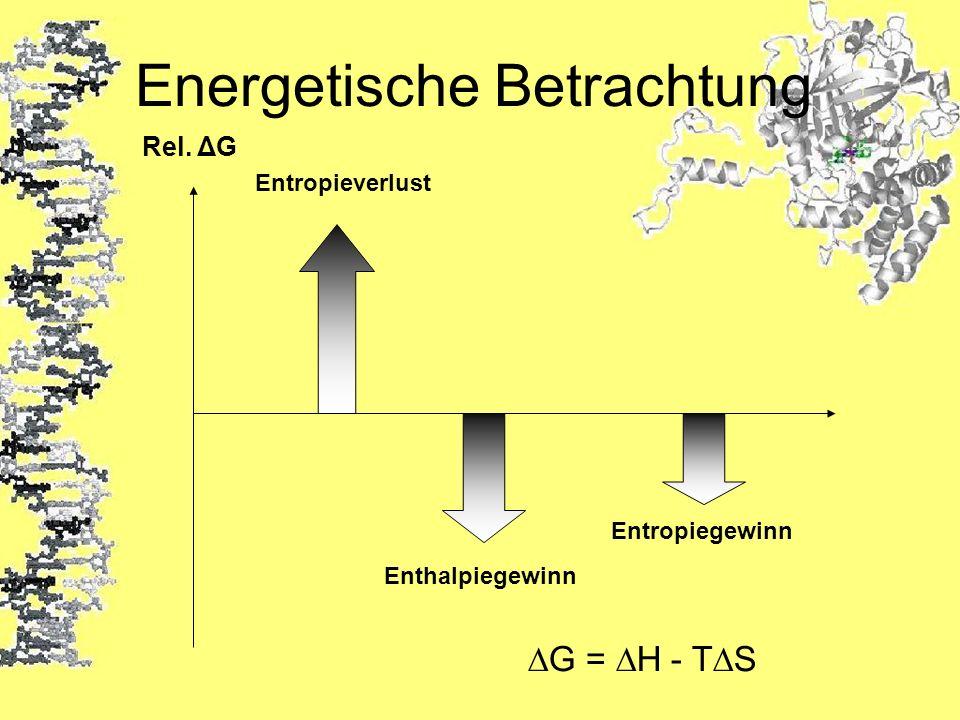 Energetische Betrachtung Rel. ΔG Entropieverlust Enthalpiegewinn Entropiegewinn G = H - TS