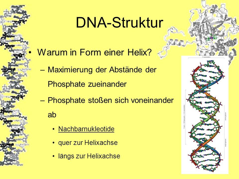 DNA-Struktur Warum in Form einer Helix? –Maximierung der Abstände der Phosphate zueinander –Phosphate stoßen sich voneinander ab Nachbarnukleotide que