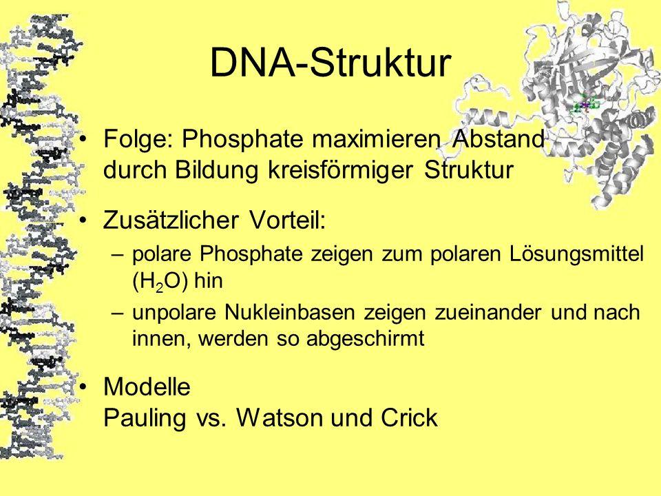 DNA-Struktur Folge: Phosphate maximieren Abstand durch Bildung kreisförmiger Struktur Zusätzlicher Vorteil: –polare Phosphate zeigen zum polaren Lösun