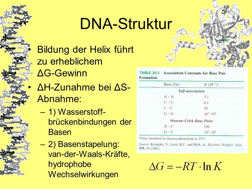 DNA-Struktur Bildung der Helix führt zu erheblichem ΔG-Gewinn ΔH-Zunahme bei ΔS- Abnahme: –1) Wasserstoff- brückenbindungen der Basen –2) Basenstapelu