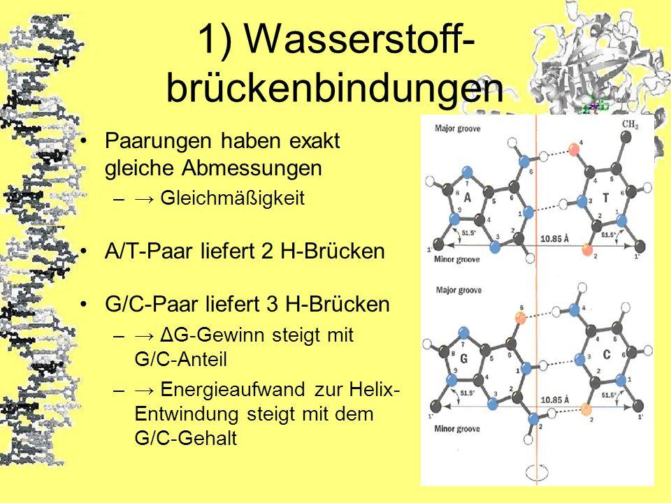 1) Wasserstoff- brückenbindungen Paarungen haben exakt gleiche Abmessungen – Gleichmäßigkeit A/T-Paar liefert 2 H-Brücken G/C-Paar liefert 3 H-Brücken