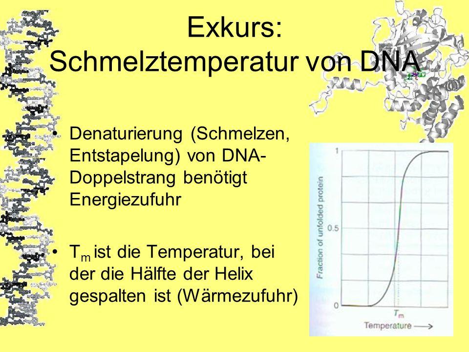 Exkurs: Schmelztemperatur von DNA Denaturierung (Schmelzen, Entstapelung) von DNA- Doppelstrang benötigt Energiezufuhr T m ist die Temperatur, bei der