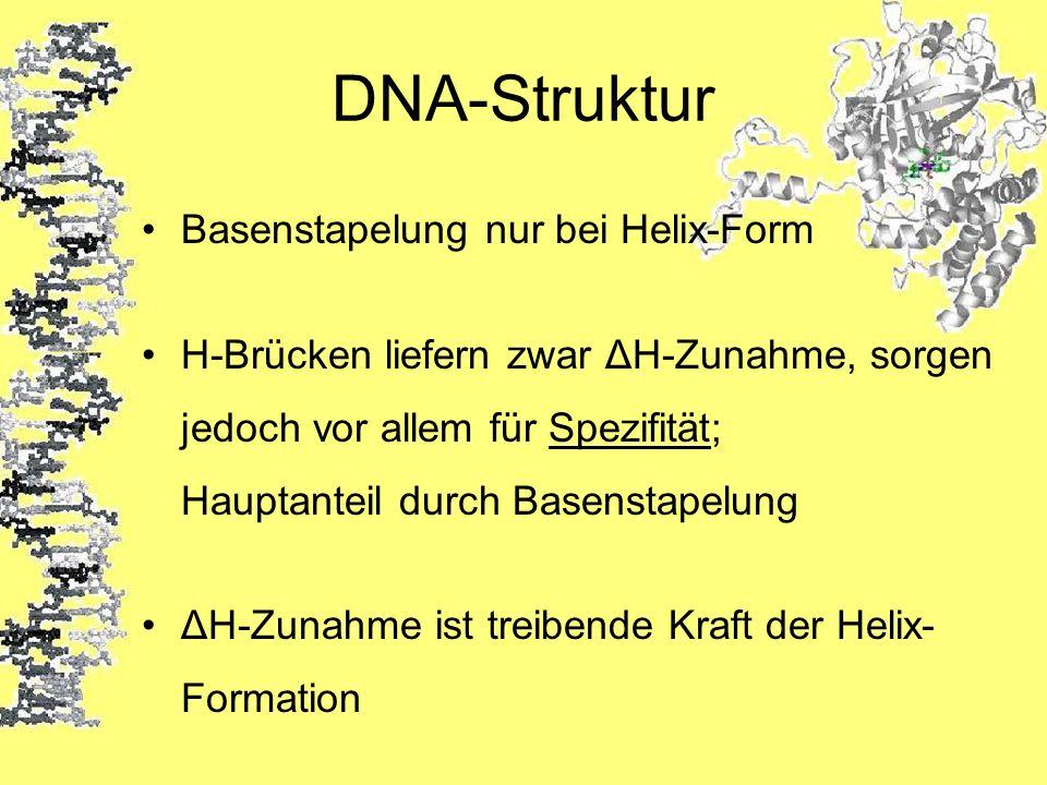 DNA-Struktur Basenstapelung nur bei Helix-Form H-Brücken liefern zwar ΔH-Zunahme, sorgen jedoch vor allem für Spezifität; Hauptanteil durch Basenstape