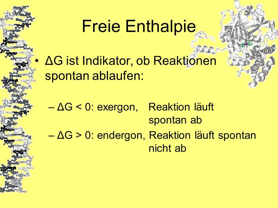 Freie Enthalpie ΔG ist Indikator, ob Reaktionen spontan ablaufen: –ΔG < 0: exergon, Reaktion läuft spontan ab –ΔG > 0: endergon, Reaktion läuft sponta