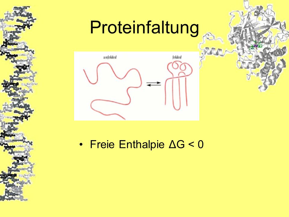 Proteinfaltung Freie Enthalpie ΔG < 0