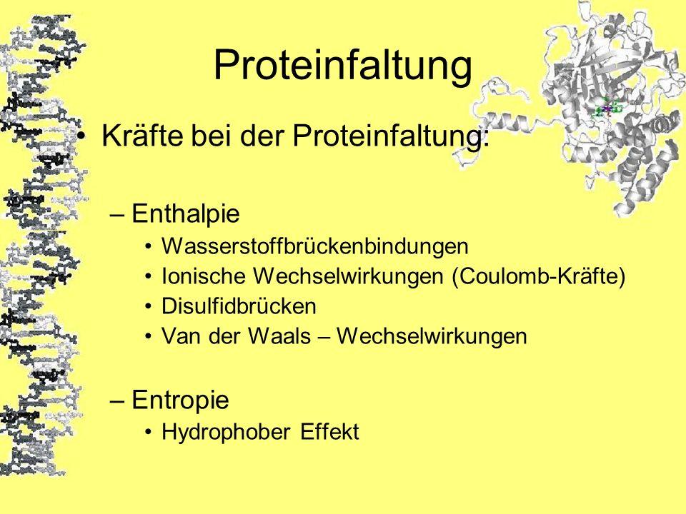 Proteinfaltung Kräfte bei der Proteinfaltung: –Enthalpie Wasserstoffbrückenbindungen Ionische Wechselwirkungen (Coulomb-Kräfte) Disulfidbrücken Van de
