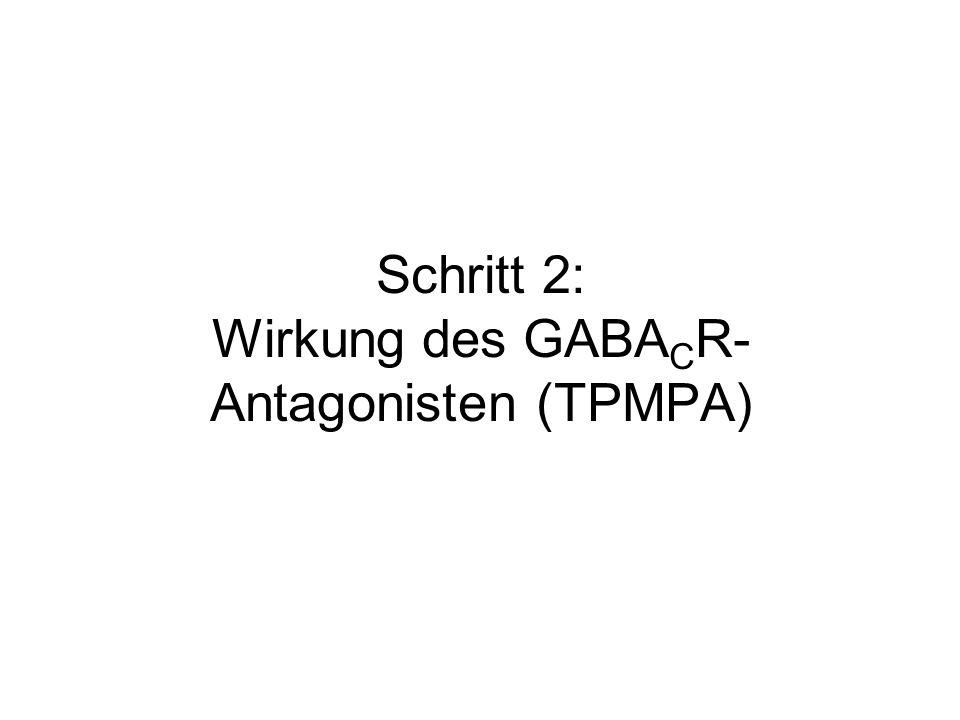 Schritt 2: Wirkung des GABA C R- Antagonisten (TPMPA)