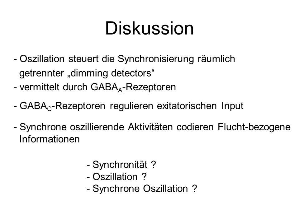 Diskussion - Oszillation steuert die Synchronisierung räumlich getrennter dimming detectors - vermittelt durch GABA A -Rezeptoren - GABA C -Rezeptoren
