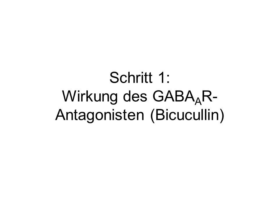 Schritt 1: Wirkung des GABA A R- Antagonisten (Bicucullin)
