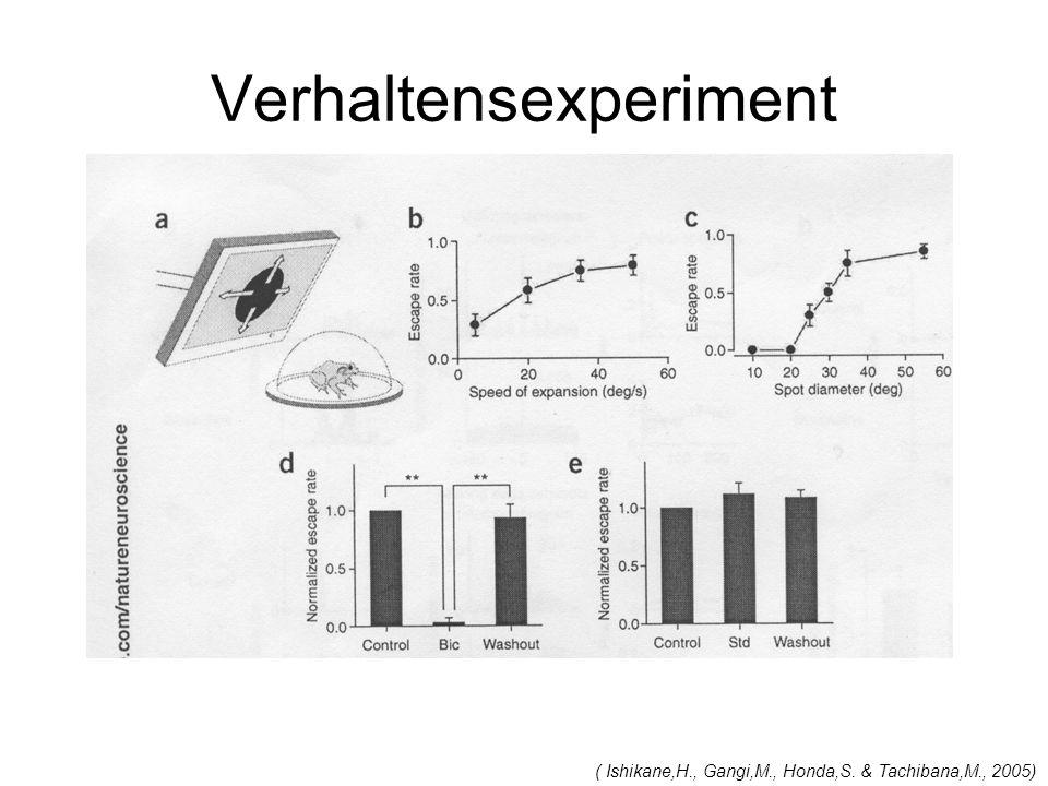 Verhaltensexperiment ( Ishikane,H., Gangi,M., Honda,S. & Tachibana,M., 2005)