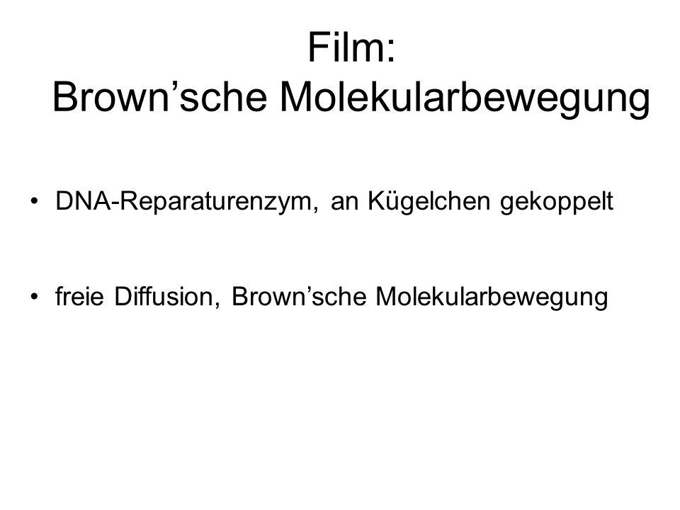 Film: Brownsche Molekularbewegung DNA-Reparaturenzym, an Kügelchen gekoppelt freie Diffusion, Brownsche Molekularbewegung