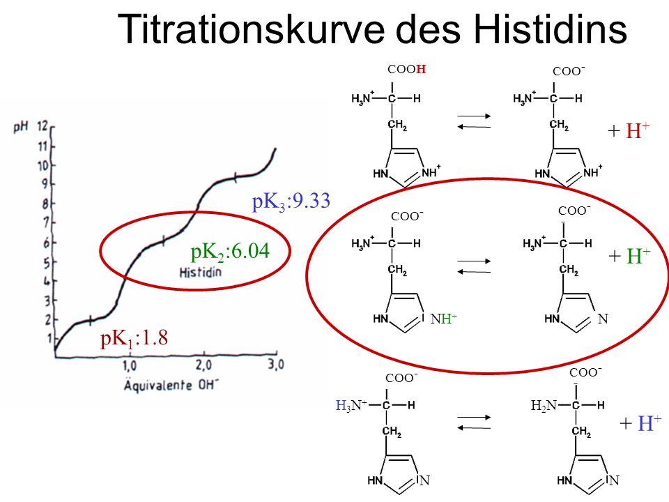 Titrationskurve des Histidins COOH COO - + H + NH+NH+ N COO - N NN + H + H3N+H3N+ H2NH2N pK 1 :1.8 pK 2 :6.04 pK 3 :9.33