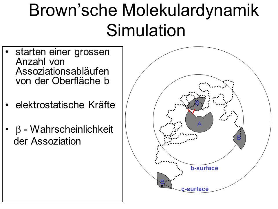 Brownsche Molekulardynamik Simulation starten einer grossen Anzahl von Assoziationsabläufen von der Oberfläche b elektrostatische Kräfte - Wahrscheinlichkeit der Assoziation B b-surface c-surface B A B