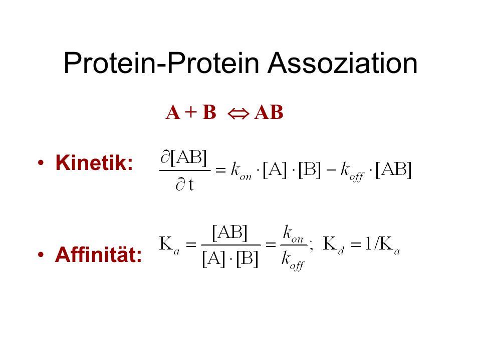 Protein-Protein Assoziation Kinetik: Affinität: A + B AB