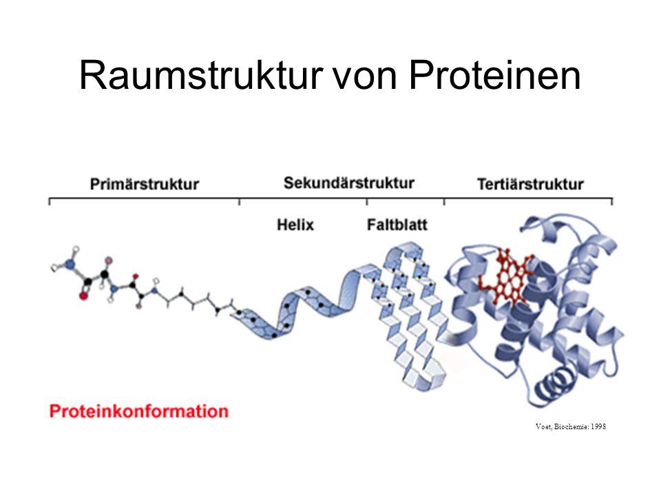 Raumstruktur von Proteinen Voet, Biochemie: 1998
