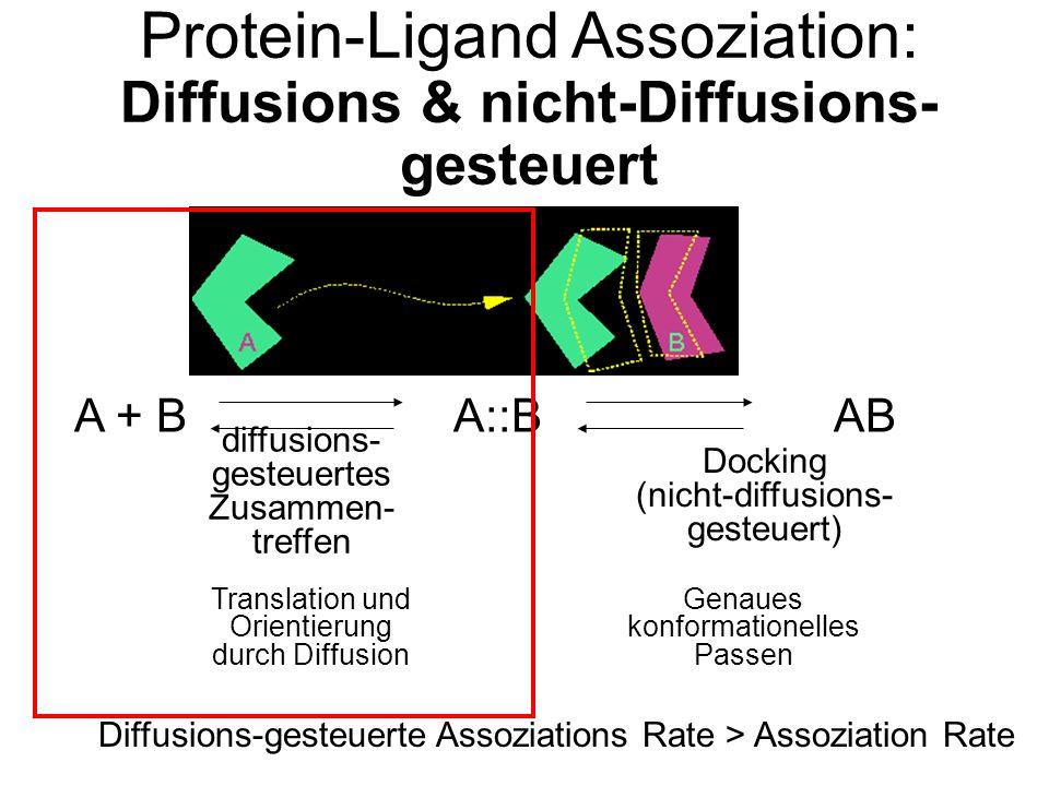 Protein-Ligand Assoziation: Diffusions & nicht-Diffusions- gesteuert A + BA::BAB diffusions- gesteuertes Zusammen- treffen Docking (nicht-diffusions- gesteuert) Translation und Orientierung durch Diffusion Genaues konformationelles Passen Diffusions-gesteuerte Assoziations Rate > Assoziation Rate