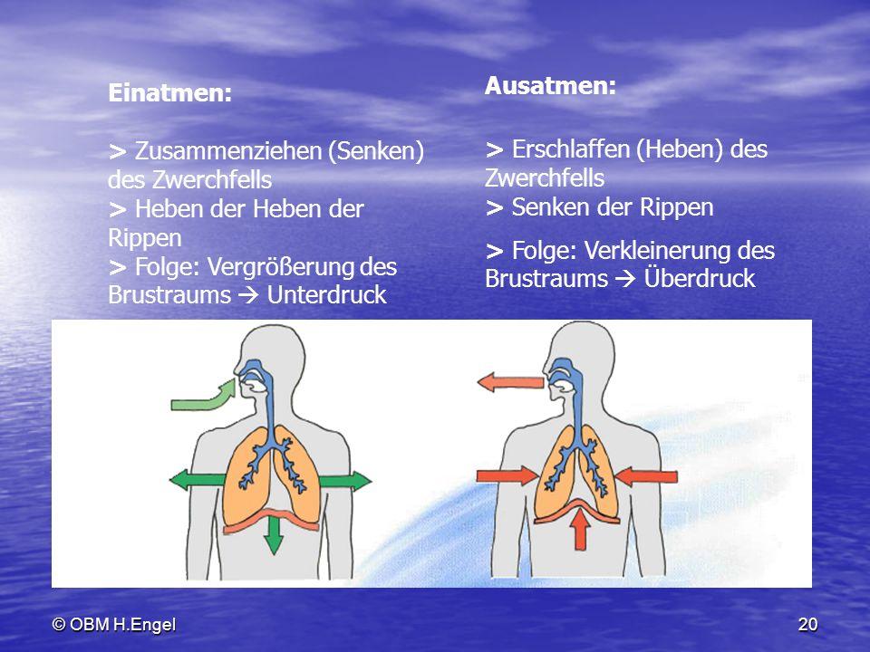 © OBM H.Engel20 Einatmen: > Zusammenziehen (Senken) des Zwerchfells > Heben der Heben der Rippen > Folge: Vergrößerung des Brustraums Unterdruck Ausat