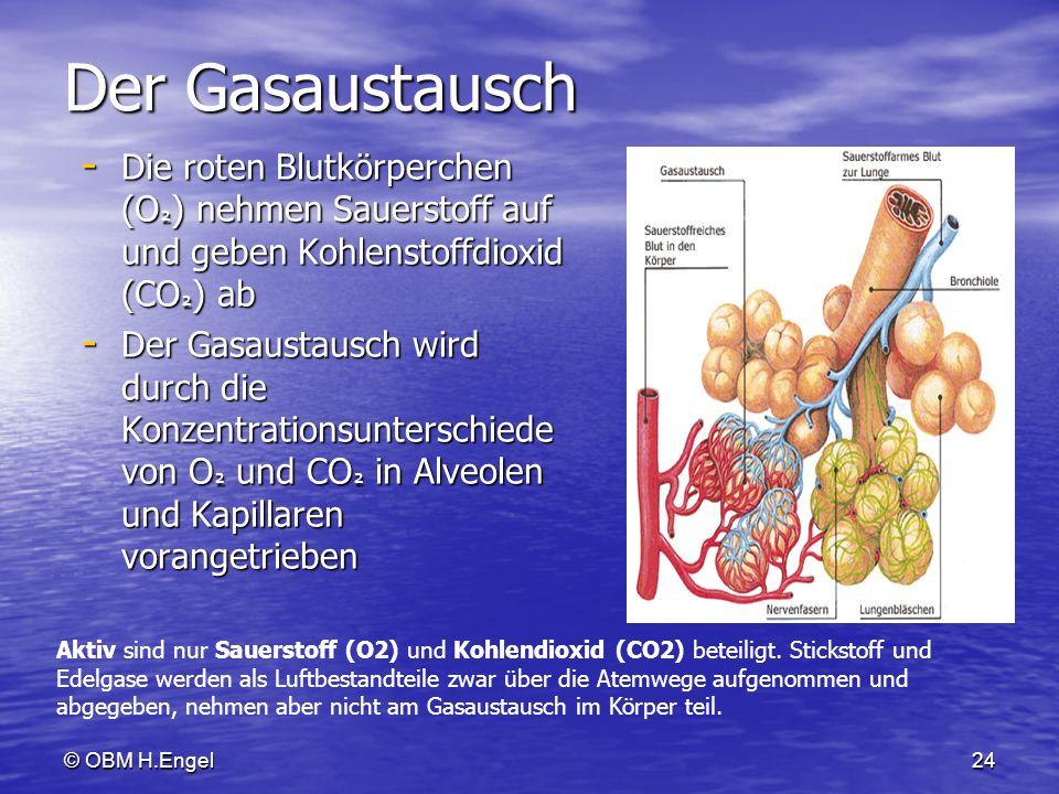 © OBM H.Engel24 Der Gasaustausch - Die roten Blutkörperchen (O ² ) nehmen Sauerstoff auf und geben Kohlenstoffdioxid (CO ² ) ab - Der Gasaustausch wir