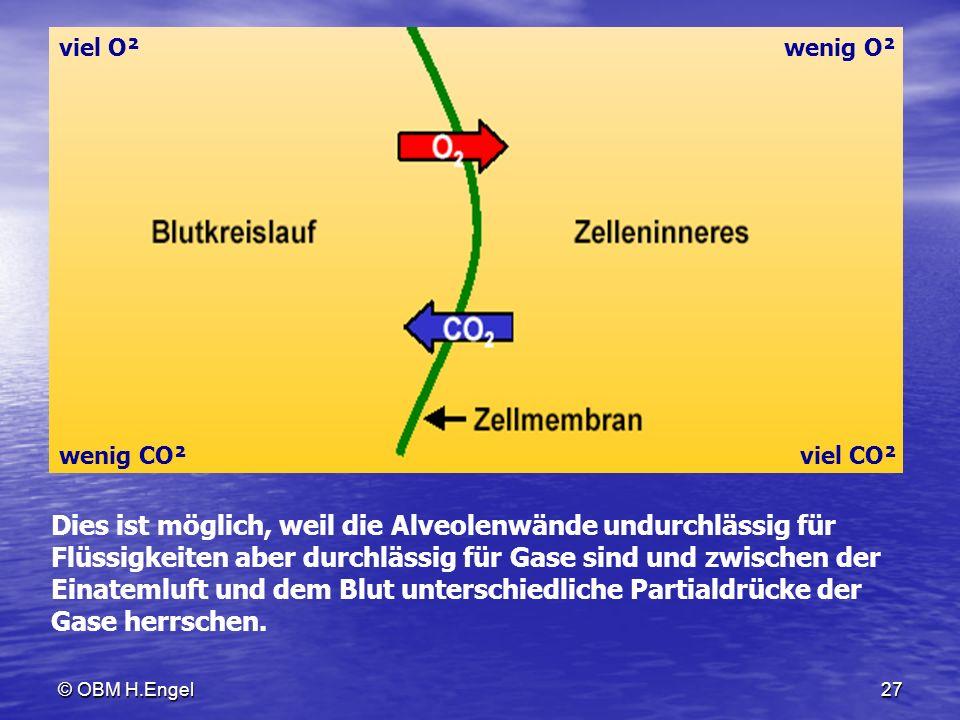 © OBM H.Engel27 viel O² wenig CO² wenig O² viel CO² Dies ist möglich, weil die Alveolenwände undurchlässig für Flüssigkeiten aber durchlässig für Gase