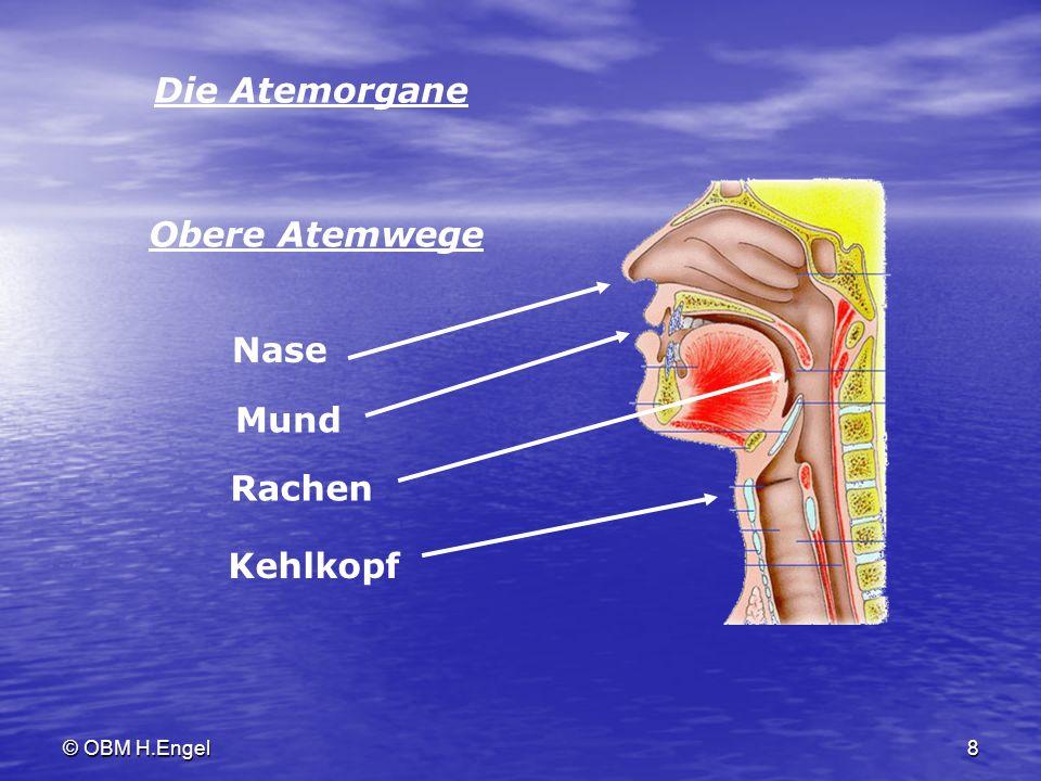 © OBM H.Engel8 Die Atemorgane Nase Mund Rachen Obere Atemwege Kehlkopf
