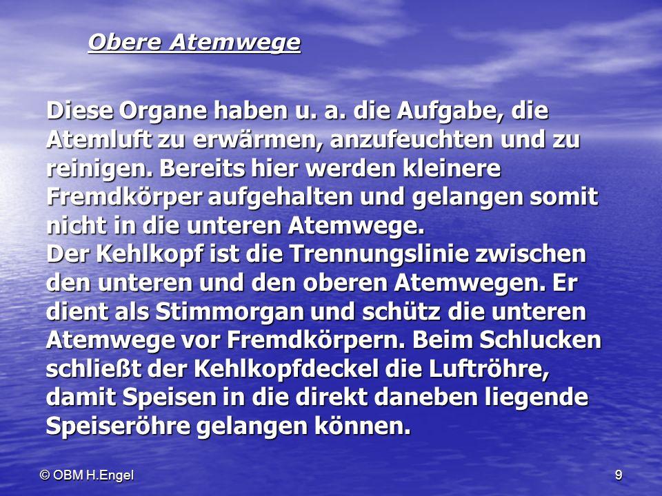 © OBM H.Engel9 Obere Atemwege Diese Organe haben u. a. die Aufgabe, die Atemluft zu erwärmen, anzufeuchten und zu reinigen. Bereits hier werden kleine