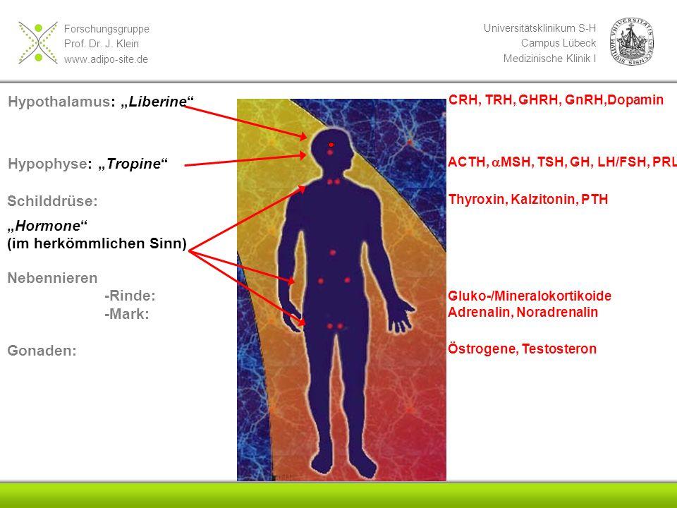 Forschungsgruppe Prof. Dr. J. Klein www.adipo-site.de Universitätsklinikum S-H Campus Lübeck Medizinische Klinik I Hypophyse: Tropine ACTH, MSH, TSH,
