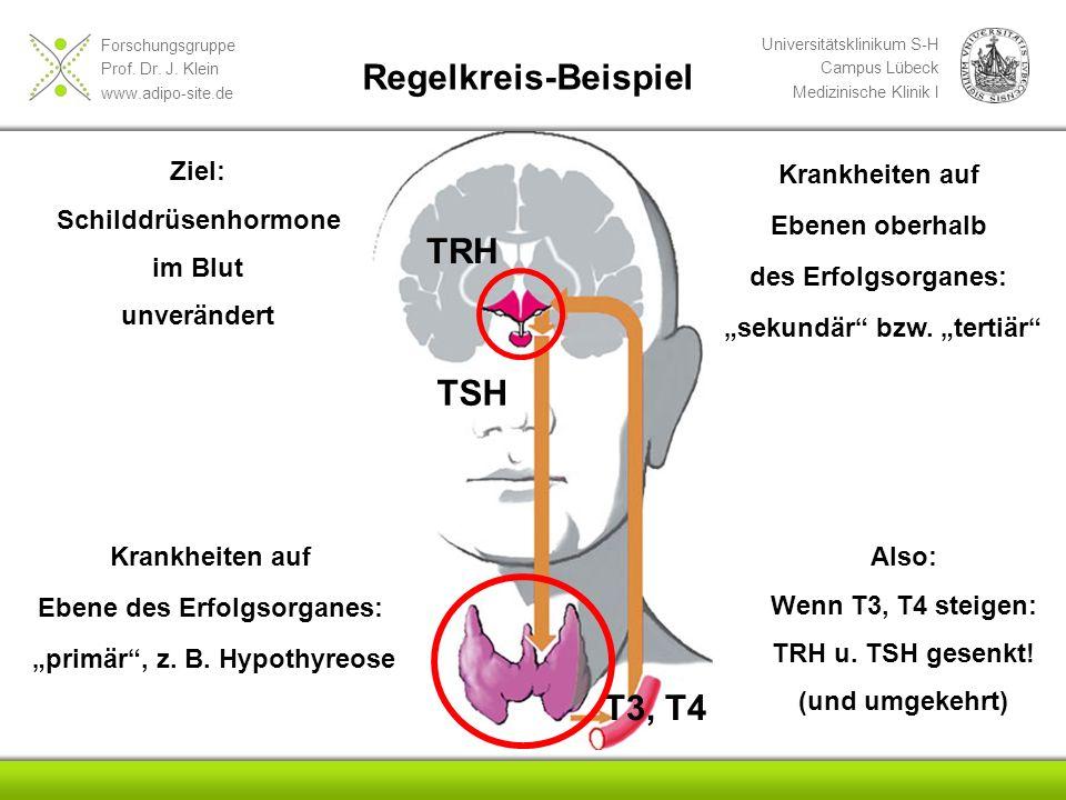 Forschungsgruppe Prof. Dr. J. Klein www.adipo-site.de Universitätsklinikum S-H Campus Lübeck Medizinische Klinik I Ziel: Schilddrüsenhormone im Blut u