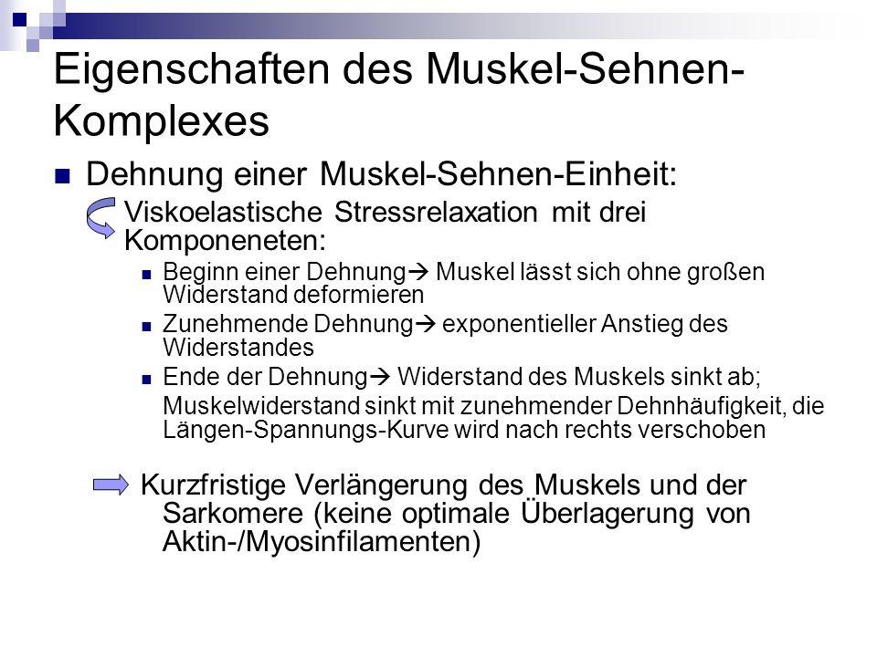 Eigenschaften des Muskel-Sehnen- Komplexes Dehnung einer Muskel-Sehnen-Einheit: Viskoelastische Stressrelaxation mit drei Komponeneten: Beginn einer D