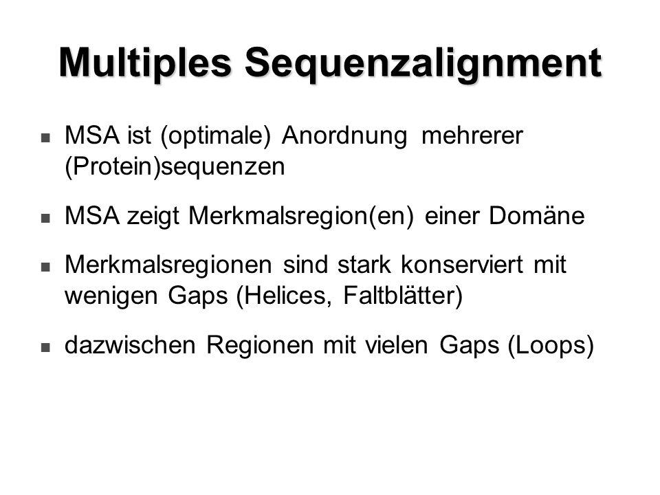 Multiples Sequenzalignment MSA ist (optimale) Anordnung mehrerer (Protein)sequenzen MSA zeigt Merkmalsregion(en) einer Domäne Merkmalsregionen sind st