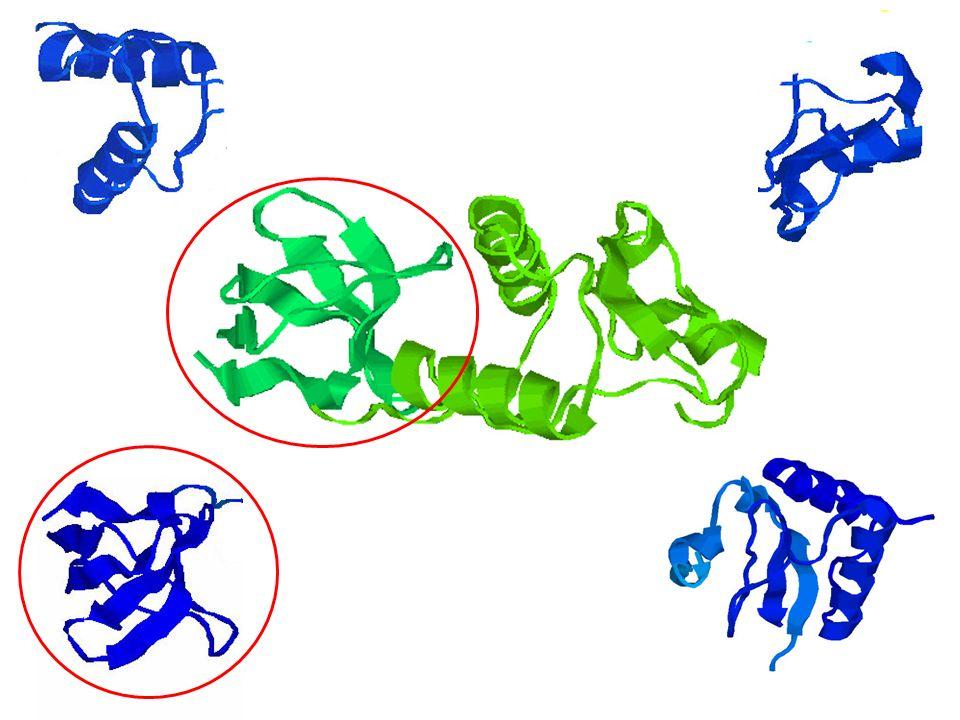 FAZIT Profile HMMs aus MSA erzeugbar Wahrscheinlichkeiten für Emission und Transition werden abgeschätzt Suche findet Proteindomänen und -familien Viterbi- und Forward-Algorithmus mit dynamischer Programmierung Realisierung in PFAM