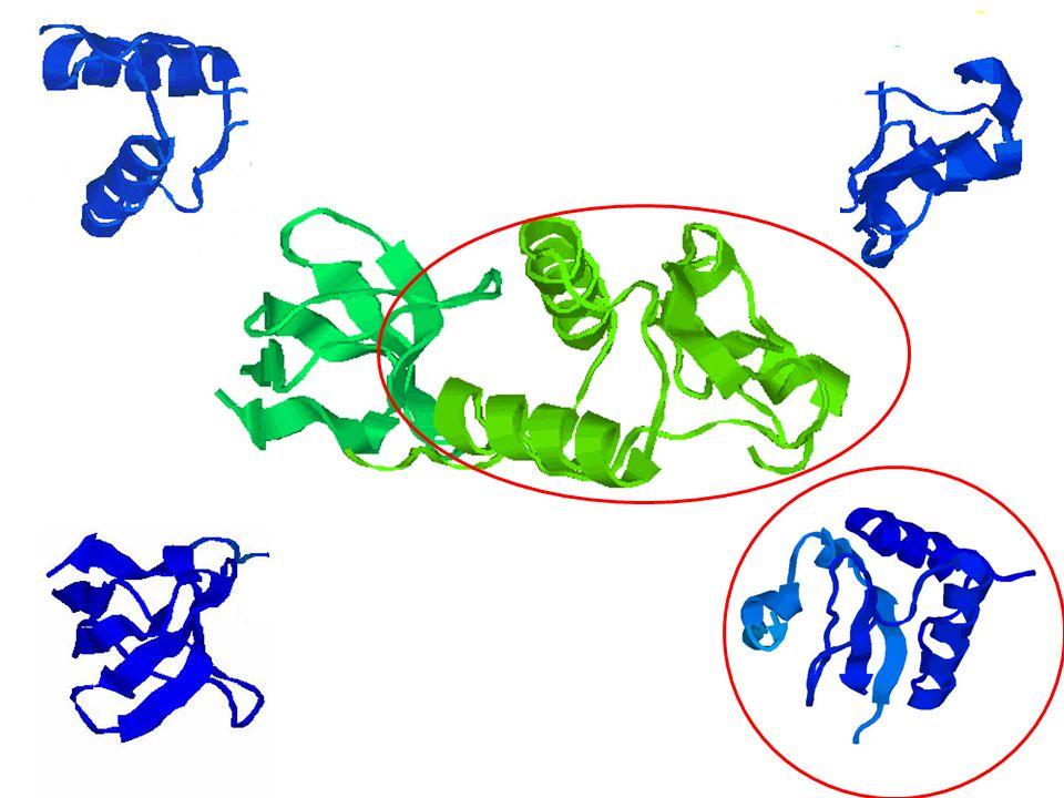 Biologischer Hintergrund verschiedene Organismen haben Proteine mit ähnlichen Funktionen Proteine mit ähnlichen Funktionen in Protein- Familien gruppierbar Frage: Gegeben ein Protein - kann man es einer Protein-Familie zuordnen ?