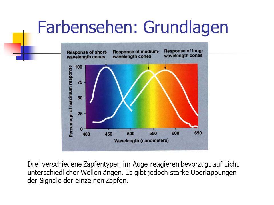 Farbensehen: Grundlagen Drei verschiedene Zapfentypen im Auge reagieren bevorzugt auf Licht unterschiedlicher Wellenlängen. Es gibt jedoch starke Über
