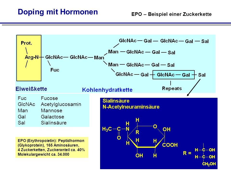FucFucose GlcNAcAcetylglucosamin ManMannose GalGalactose SalSialinsäure EPO (Erythropoietin): Peptidhormon (Glykoprotein), 165 Aminosäuren, 4 Zuckerketten, Zuckeranteil ca.