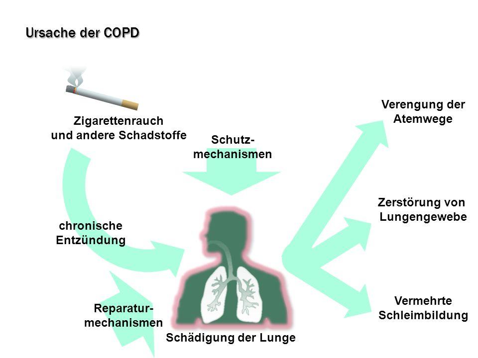 Ursache der COPD Zigarettenrauch und andere Schadstoffe Schädigung der Lunge Zerstörung von Lungengewebe Vermehrte Schleimbildung Verengung der Atemwe