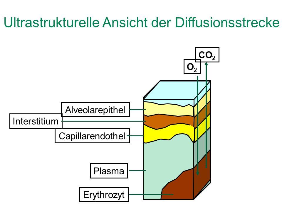 Ultrastrukturelle Ansicht der Diffusionsstrecke 1 µm AlveolarepithelInterstitiumCapillarendothelPlasmaErythrozyt CO 2 O2O2