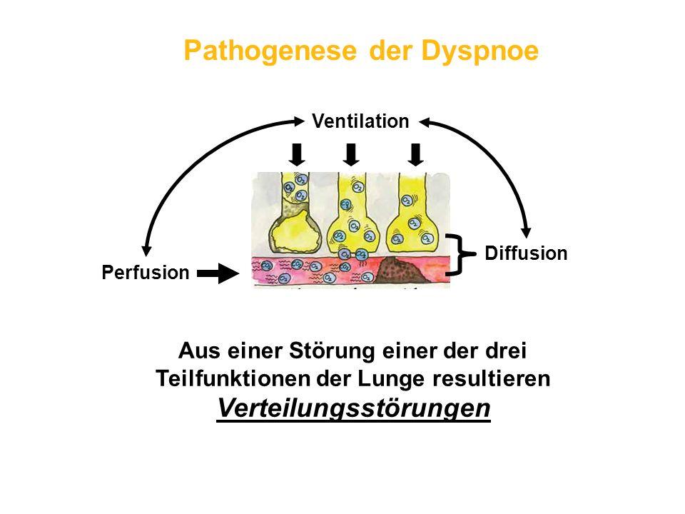 Pathogenese der Dyspnoe Ventilation Perfusion Diffusion Aus einer Störung einer der drei Teilfunktionen der Lunge resultieren Verteilungsstörungen