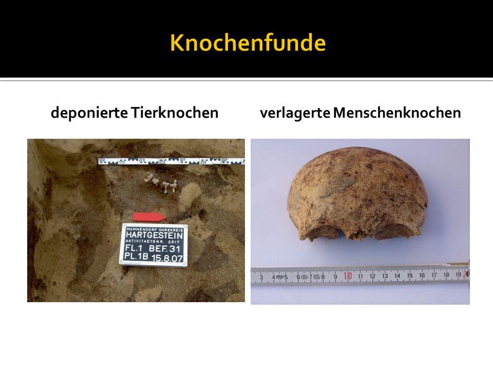 deponierte Tierknochen verlagerte Menschenknochen